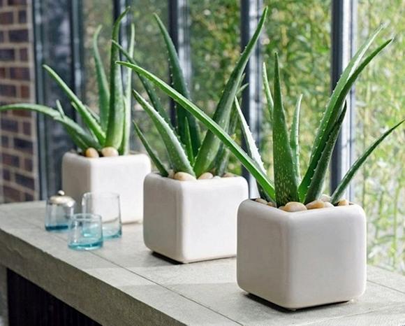 plants-7