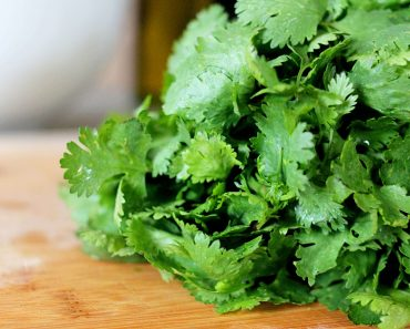 Cilantro to fight heavy metal in your body