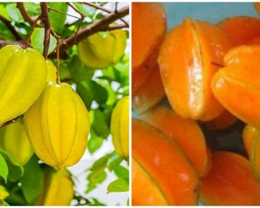 have-you-heard-about-this-miracle-fruit-it-controls-diabetes-lowers-cholesterol-and-fights-inflammation