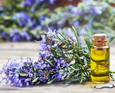 Rosemary oil and herbs fighting dementia and imrpove memory