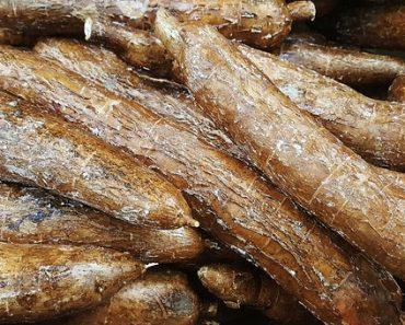 Mahinot esculenta ,Cassava, or manioc 2