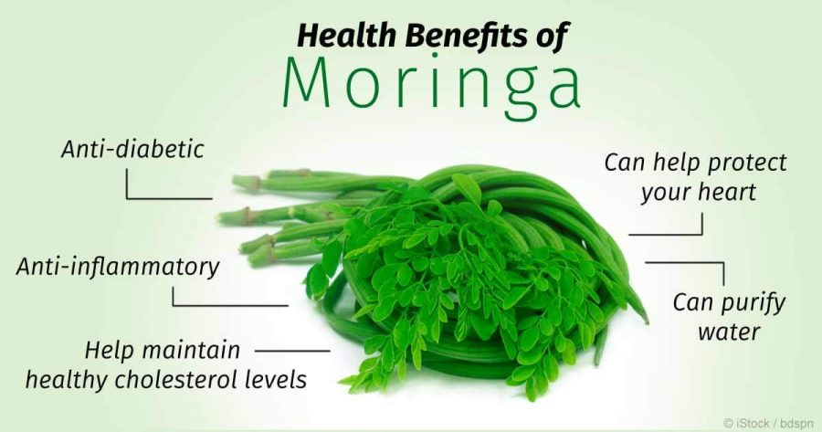 MORINGA – BOOST SEXUAL POTENCY WITH THIS FANTASTIC VEGETABLE