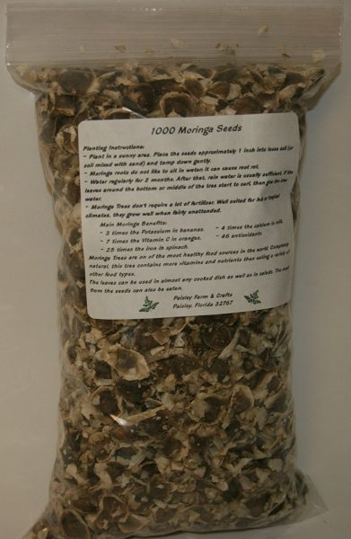 Moringa Seeds - Paisley Farm and Crafts